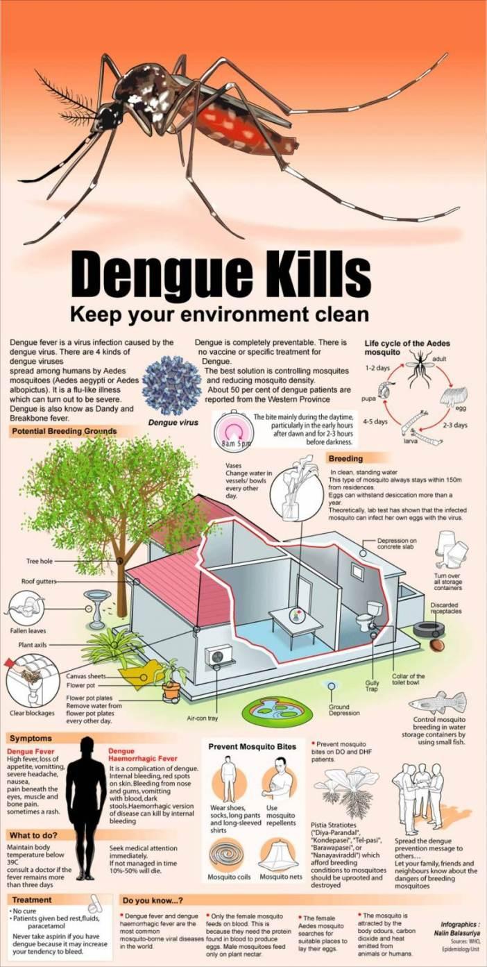 Dengue vaccine research